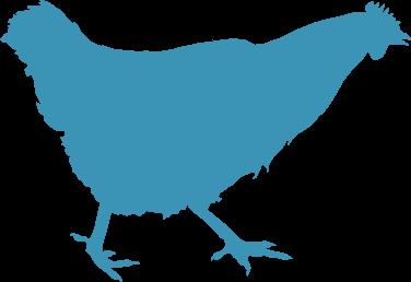 welfarm poule bleue
